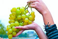 Free Bunch Of Grapes Stock Photography - 21825812