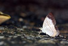 Free Butterfly Stock Photography - 21820312
