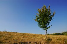 Free Lonely Tree Royalty Free Stock Image - 21825506