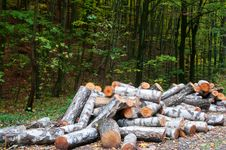 Free Firewood Stock Photos - 21826133