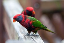 Free Colorful Parrot Stock Photos - 21826303