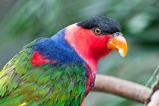 Free Parrot Stock Photos - 21826353