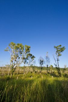 Free Tree And Clear Sky Royalty Free Stock Photo - 21827805