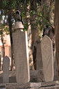 Free Graveyard In Mosque Royalty Free Stock Photography - 21838437