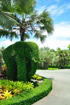 Free Elephant Tree Royalty Free Stock Photography - 21835037
