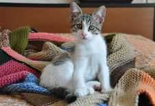Free Kitten On Hand-knit Blanket Stock Image - 21837561