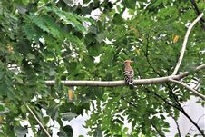Free A Hoopoe Is Standing On A Branch. Royalty Free Stock Photo - 218336525