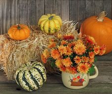 Free Mums And Gourds Stock Image - 21840531