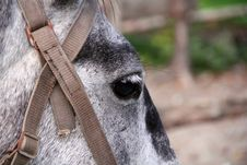 Free Picture With Horse Head And Eye Stock Photos - 21841513