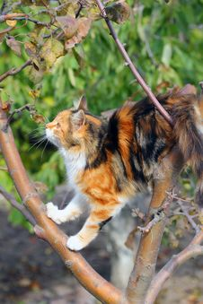 Free Cat In A Tree Stock Photography - 21848072