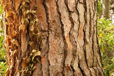 Free Tree Bark Background With Yellow Leaves Stock Photography - 21849352