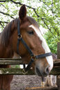 Free Horse Head Over The Fence Royalty Free Stock Photos - 21853118