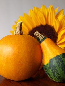 Free Harvest Stock Photos - 21850453