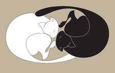 Black And White Sleeping Cats Stock Image