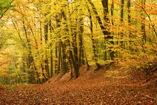 Free Autumn Forest Royalty Free Stock Images - 21861029