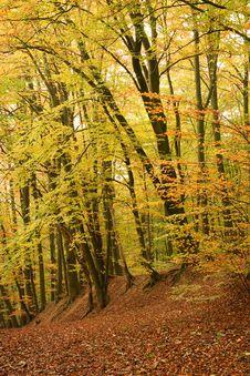 Free Autumn Stock Image - 21861141