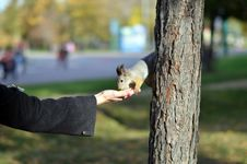 Free Feeding Of The Squirrel Royalty Free Stock Image - 21864896