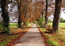 Free Autumn Landscape With Lane Between Trees Royalty Free Stock Image - 21871286