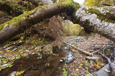 Free Landscape Autumn Royalty Free Stock Image - 21875796