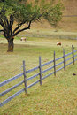 Free Wooden Fence Near Forest Stock Photo - 21882420
