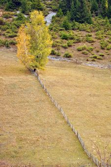 Free Diagonal Tree Stock Photography - 21882252