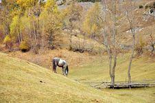 Horse On Autumn Hill Stock Photos