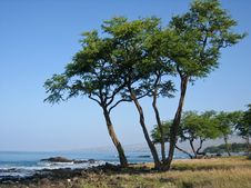 Ocean Bay Coastline With Beautiful Trees