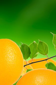 Free Oranges With Leaves On Green Background Stock Photo - 21883770