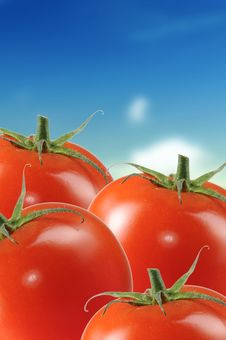 Free Ripe Tomatoes On Blue Sky Background Royalty Free Stock Image - 21883786