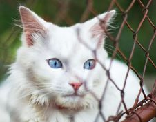 Free White Cat Behind Grid Royalty Free Stock Image - 21884886