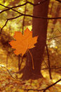 Free Autumn Leave Royalty Free Stock Photography - 21894417