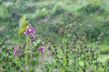 Nettle And Foxglove In The Rain Stock Image
