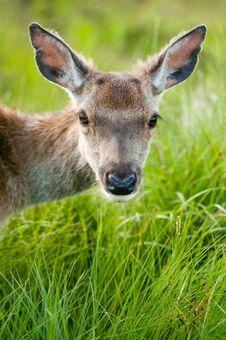 Free Whitetail Buck Portrait Stock Photos - 21892203