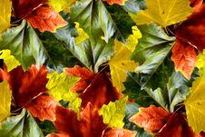 Free Autumn Colors Stock Image - 21893651