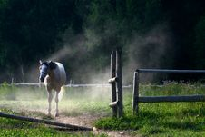 Free White Horse Standing Behind Opened Gate In Dust Royalty Free Stock Photography - 21894117