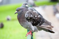 Free Pigeons In A Park Stock Photos - 21897603