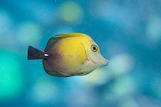 Free Yellow Fish Stock Image - 21897691