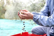 Free The Olive Harvest Royalty Free Stock Images - 21897839