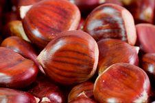 Free Chestnut Royalty Free Stock Image - 21899516
