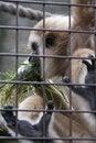 Free Caged Monkey Stock Photo - 2190340