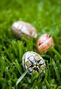 Free Wax Decorated Easter Eggs Stock Photos - 2191713