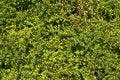 Free Leaf Background Stock Images - 2193264