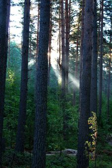 Free Sunrise In A Wood. Stock Photography - 2190542