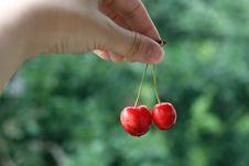 Free First Cherries Stock Image - 2191011