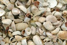 Free Shells Royalty Free Stock Photography - 2191347