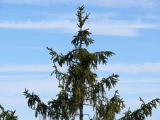 Free Tree Top Stock Image - 2191461