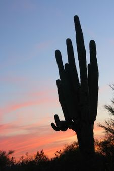 Free Saguaro Sunset Stock Images - 2191544