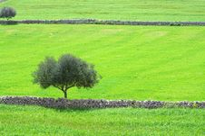Free The Sicilian Landscape Stock Image - 2191861