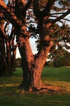 Free Tree Sunset Stock Images - 2193794