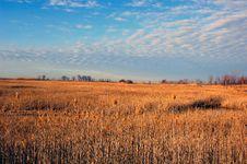 Free Wild Grass Stock Image - 2194391